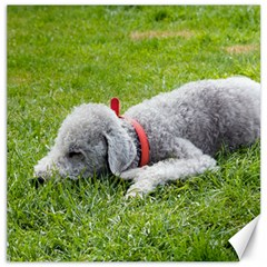 Bedlington Terrier Sleeping Canvas 12  x 12