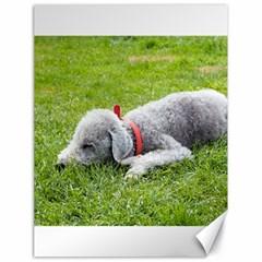 Bedlington Terrier Sleeping Canvas 18  x 24