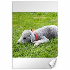 Bedlington Terrier Sleeping Canvas 24  x 36