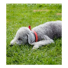 Bedlington Terrier Sleeping Shower Curtain 66  x 72  (Large)