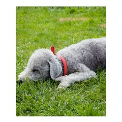 Bedlington Terrier Sleeping Shower Curtain 60  x 72  (Medium)