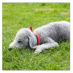 Bedlington Terrier Sleeping Large Satin Scarf (Square)