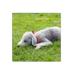 Bedlington Terrier Sleeping Satin Bandana Scarf