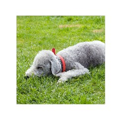 Bedlington Terrier Sleeping Small Satin Scarf (Square)
