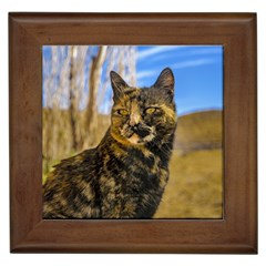 Adult Wild Cat Sitting and Watching Framed Tiles