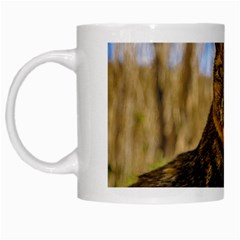 Adult Wild Cat Sitting and Watching White Mugs