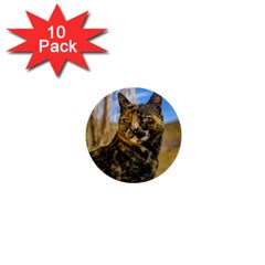 Adult Wild Cat Sitting and Watching 1  Mini Buttons (10 pack)
