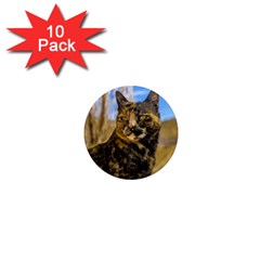 Adult Wild Cat Sitting and Watching 1  Mini Magnet (10 pack)