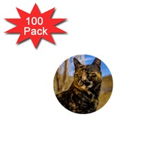 Adult Wild Cat Sitting and Watching 1  Mini Buttons (100 pack)