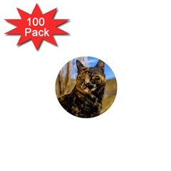 Adult Wild Cat Sitting and Watching 1  Mini Magnets (100 pack)
