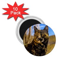 Adult Wild Cat Sitting and Watching 1.75  Magnets (10 pack)