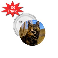 Adult Wild Cat Sitting and Watching 1.75  Buttons (100 pack)