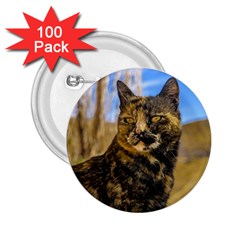 Adult Wild Cat Sitting and Watching 2.25  Buttons (100 pack)