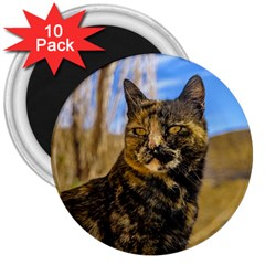 Adult Wild Cat Sitting and Watching 3  Magnets (10 pack)