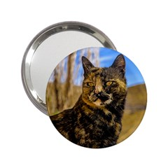 Adult Wild Cat Sitting and Watching 2.25  Handbag Mirrors
