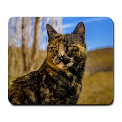 Adult Wild Cat Sitting and Watching Large Mousepads