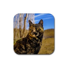 Adult Wild Cat Sitting and Watching Rubber Coaster (Square)