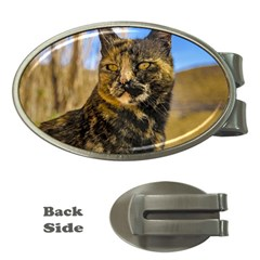 Adult Wild Cat Sitting and Watching Money Clips (Oval)