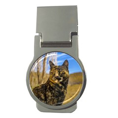 Adult Wild Cat Sitting and Watching Money Clips (Round)
