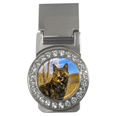 Adult Wild Cat Sitting and Watching Money Clips (CZ)