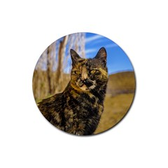 Adult Wild Cat Sitting and Watching Rubber Coaster (Round)