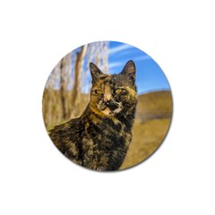 Adult Wild Cat Sitting and Watching Magnet 3  (Round)