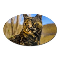 Adult Wild Cat Sitting and Watching Oval Magnet