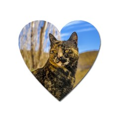 Adult Wild Cat Sitting and Watching Heart Magnet