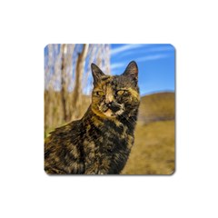 Adult Wild Cat Sitting and Watching Square Magnet