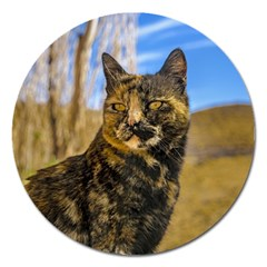 Adult Wild Cat Sitting and Watching Magnet 5  (Round)