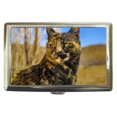 Adult Wild Cat Sitting and Watching Cigarette Money Cases
