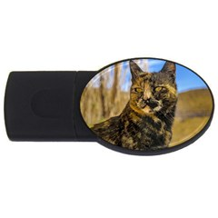 Adult Wild Cat Sitting and Watching USB Flash Drive Oval (4 GB)