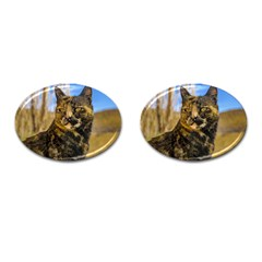 Adult Wild Cat Sitting and Watching Cufflinks (Oval)