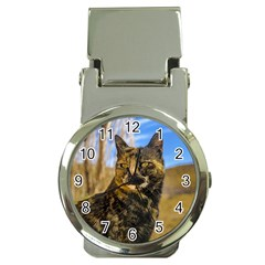 Adult Wild Cat Sitting and Watching Money Clip Watches
