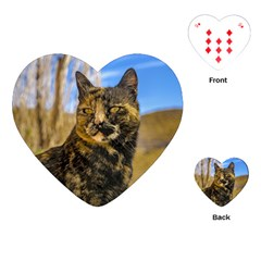 Adult Wild Cat Sitting and Watching Playing Cards (Heart)