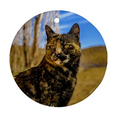 Adult Wild Cat Sitting and Watching Round Ornament (Two Sides)