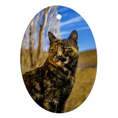 Adult Wild Cat Sitting and Watching Oval Ornament (Two Sides)