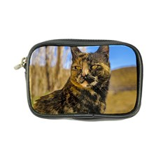 Adult Wild Cat Sitting and Watching Coin Purse