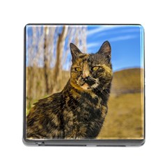 Adult Wild Cat Sitting and Watching Memory Card Reader (Square)