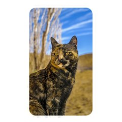 Adult Wild Cat Sitting and Watching Memory Card Reader