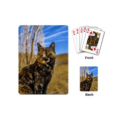 Adult Wild Cat Sitting and Watching Playing Cards (Mini)