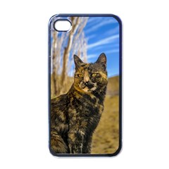 Adult Wild Cat Sitting and Watching Apple iPhone 4 Case (Black)