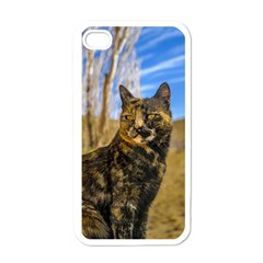 Adult Wild Cat Sitting and Watching Apple iPhone 4 Case (White)