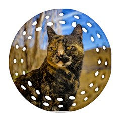 Adult Wild Cat Sitting and Watching Round Filigree Ornament (Two Sides)