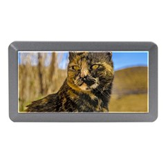 Adult Wild Cat Sitting and Watching Memory Card Reader (Mini)