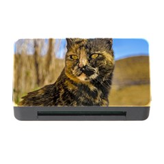 Adult Wild Cat Sitting and Watching Memory Card Reader with CF