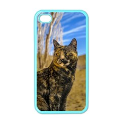 Adult Wild Cat Sitting and Watching Apple iPhone 4 Case (Color)