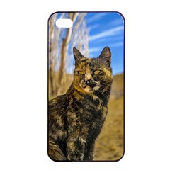 Adult Wild Cat Sitting and Watching Apple iPhone 4/4s Seamless Case (Black)