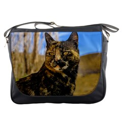 Adult Wild Cat Sitting and Watching Messenger Bags