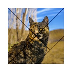 Adult Wild Cat Sitting and Watching Acrylic Tangram Puzzle (6  x 6 )